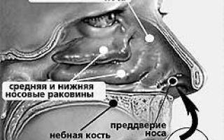 Профилактика и лечение острого ринита у взрослых и детей