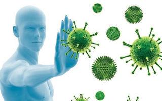 Иммунитет: чтобы знать, как укрепить, нужно знать, как работает иммунитет человека