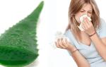 Лечение насморка соком алоэ: рецепты